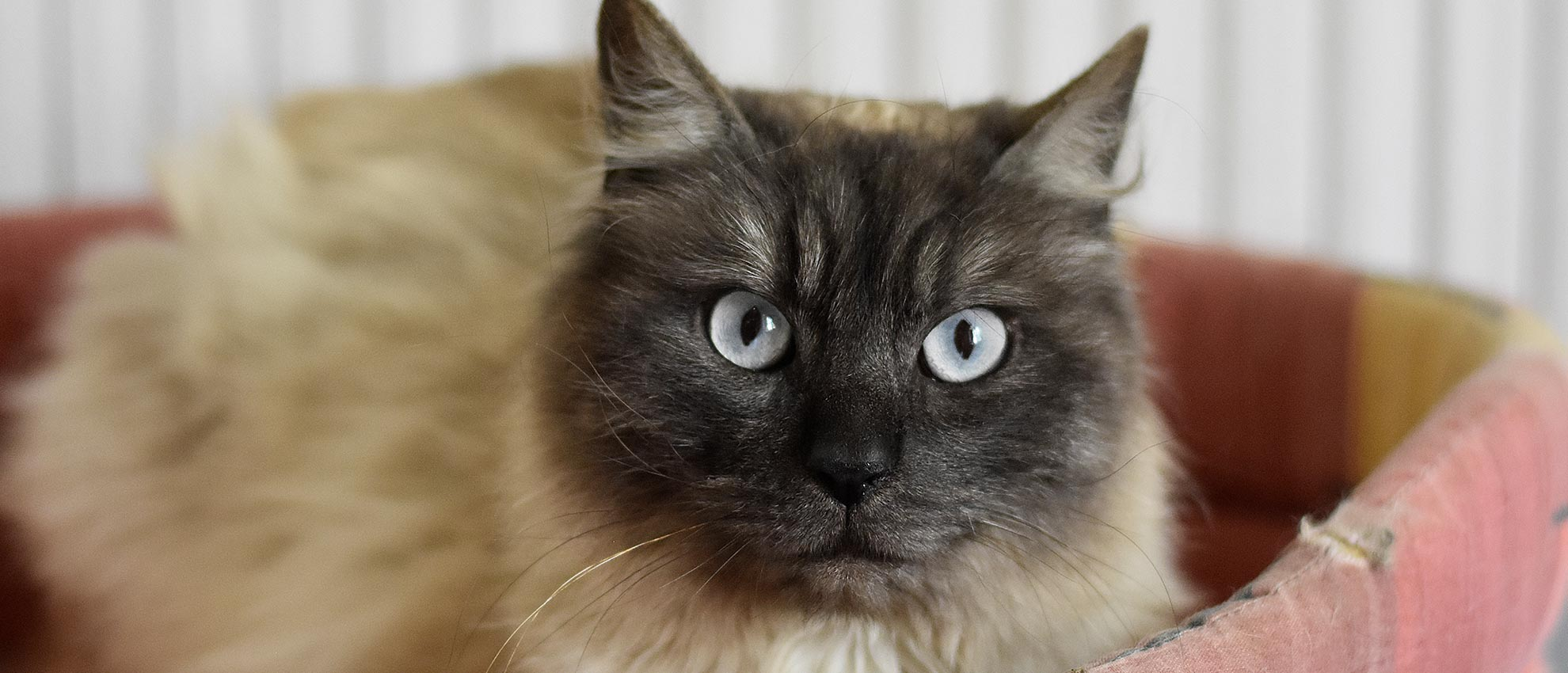 pensione per gatti canton ticino mendrisio novazzano
