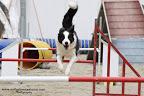 agility dog disc dog mulino prudenza canton ticino mendrisio novazzano