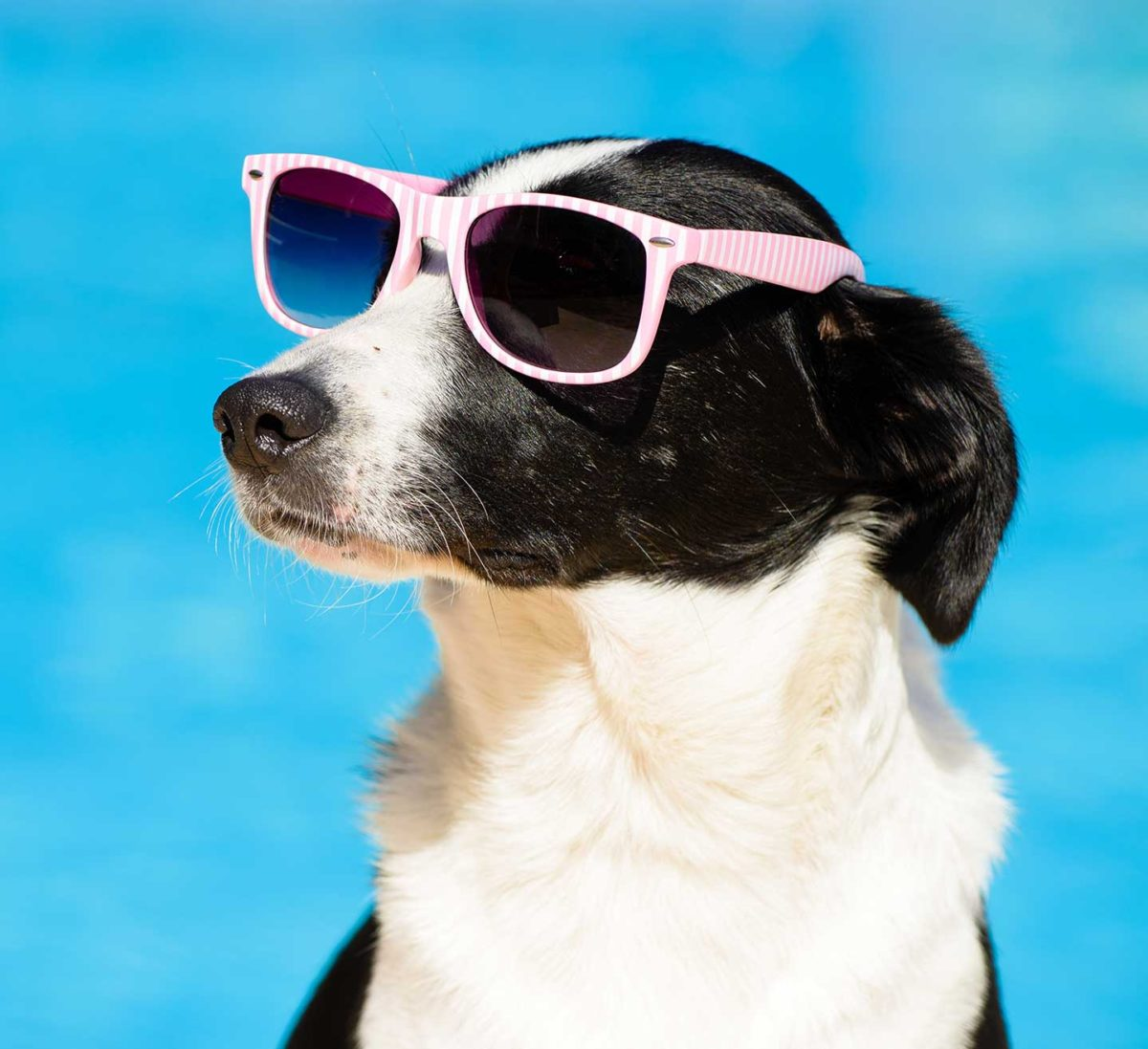 mulino prudenza piscina per cani canton ticino mendrisio novazzano